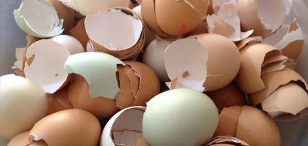 فوائد قشور البيض